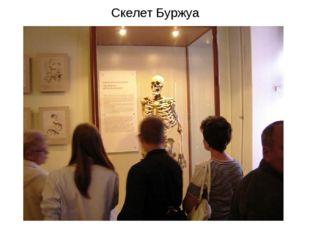 Скелет Буржуа