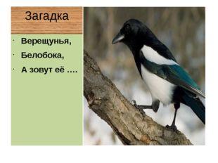 Загадка Верещунья, Белобока, А зовут её ….