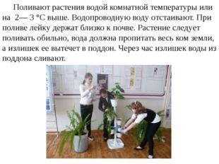 Поливают растения водой комнатной температуры или на 2— 3 °С выше. Водопрово