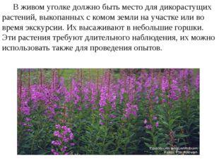 В живом уголке должно быть место для дикорастущих растений, выкопанных с ком
