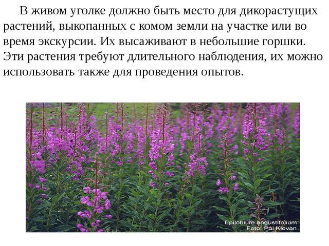 В живом уголке должно быть место для дикорастущих растений, выкопанных с ком...