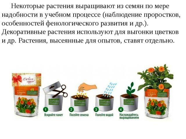Некоторые растения выращивают из семян по мере надобности в учебном процессе...