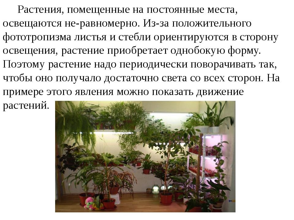Растения, помещенные на постоянные места, освещаются неравномерно. Из-за по...