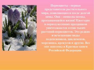 Первоцветы - первые представители растительного мира, появляющиеся после долг