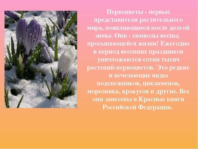 Первоцветы - первые представители растительного мира, появляющиеся после долг...