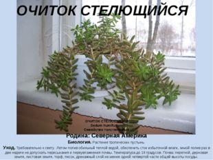 ОЧИТОК СТЕЛЮЩИЙСЯ Sedum humifusum Семейство толстянковые Родина: Северная Аме