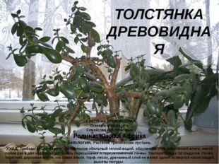 ТОЛСТЯНКА ДРЕВОВИДНАЯ Crassula arborescens Семейство толстянковых Родина: Южн