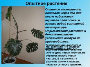 Опытное растение Опытное растение мы поливали через два дня после подсыхания
