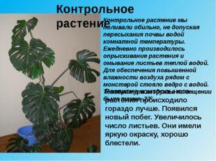 Контрольное растение мы поливали обильно, не допуская пересыхания почвы водой