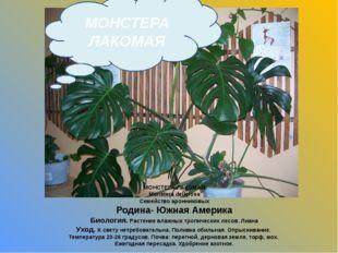 МОНСТЕРА ЛАКОМАЯ Monstera deliciosa Семейство аронниковых Родина- Южная Амери