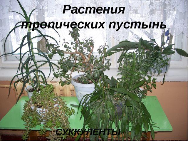Растения тропических пустынь СУККУЛЕНТЫ