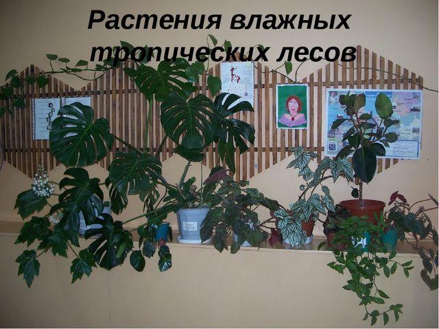 Растения влажных тропических лесов