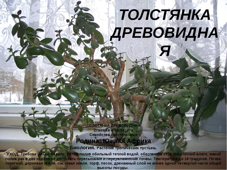 ТОЛСТЯНКА ДРЕВОВИДНАЯ Crassula arborescens Семейство толстянковых Родина: Южн...