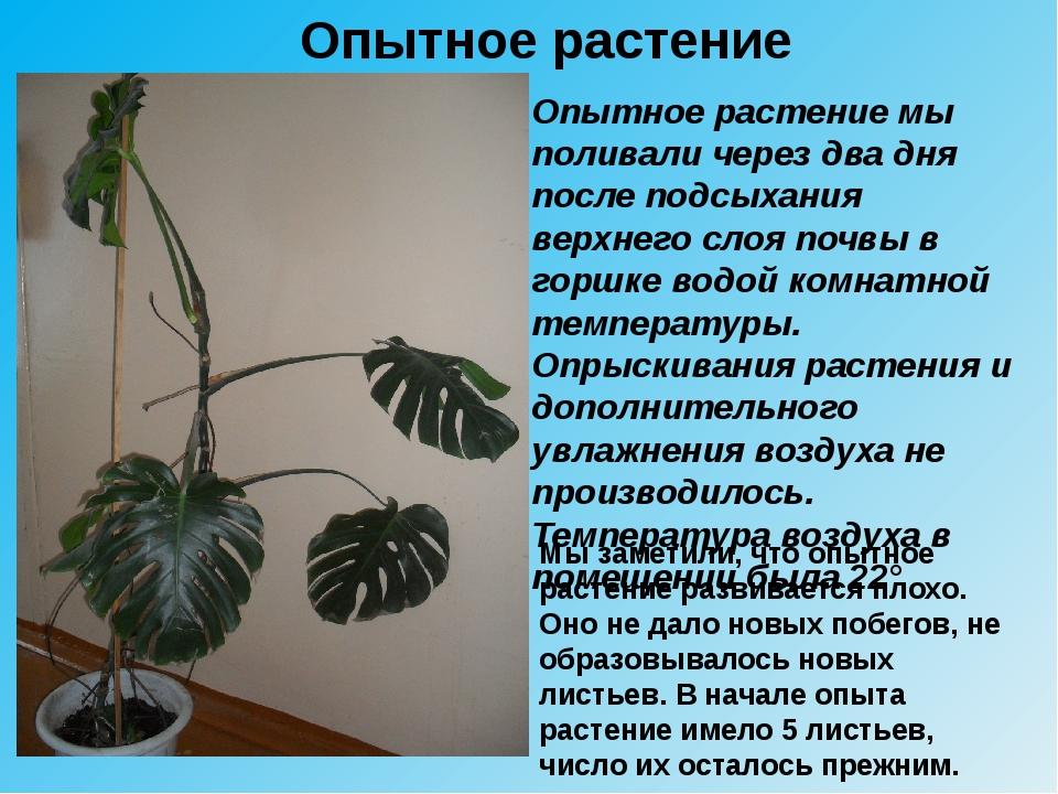 Опытное растение Опытное растение мы поливали через два дня после подсыхания...