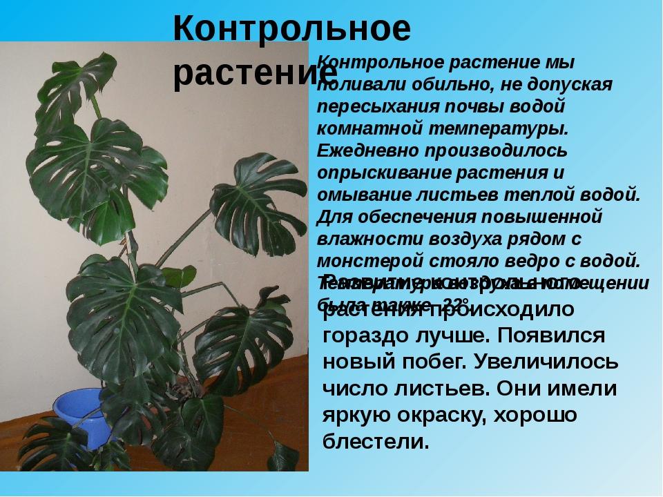 Контрольное растение мы поливали обильно, не допуская пересыхания почвы водой...