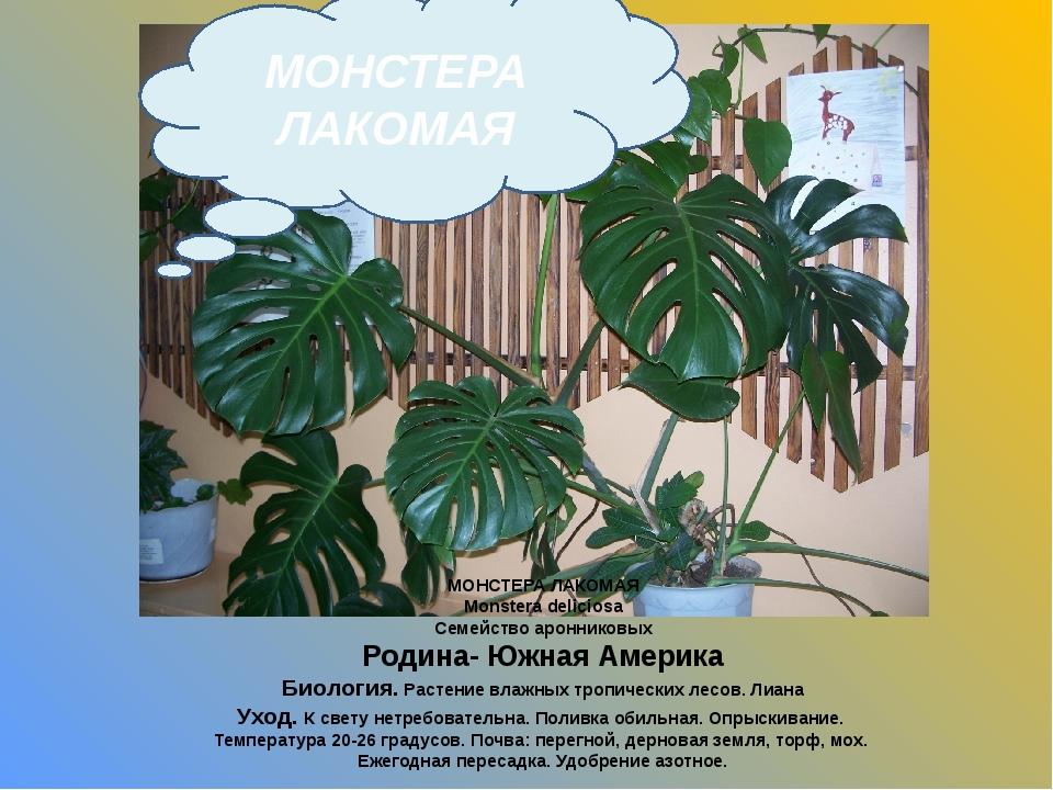 МОНСТЕРА ЛАКОМАЯ Monstera deliciosa Семейство аронниковых Родина- Южная Амери...