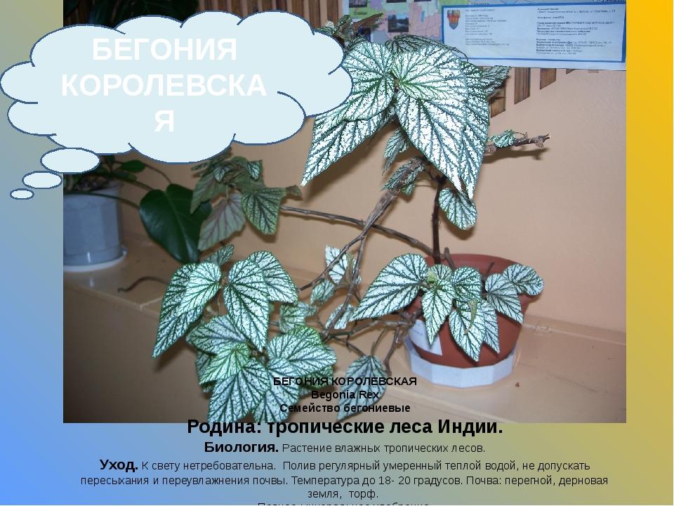 БЕГОНИЯ КОРОЛЕВСКАЯ Begonia Rex Семейство бегониевые Родина: тропические леса...