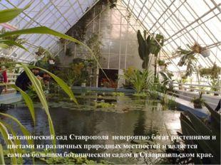 Ботанический сад Ставрополя невероятно богат растениями и цветами из различны