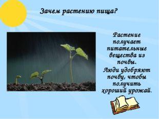 Зачем растению пища? Растение получает питательные вещества из почвы. Люди уд