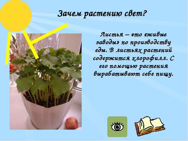 Зачем растению свет? Листья – это «живые заводы» по производству еды. В листь...