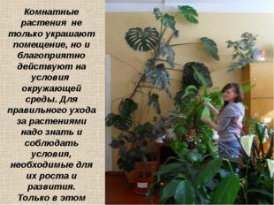 Комнатные растения не только украшают помещение, но и благоприятно действуют