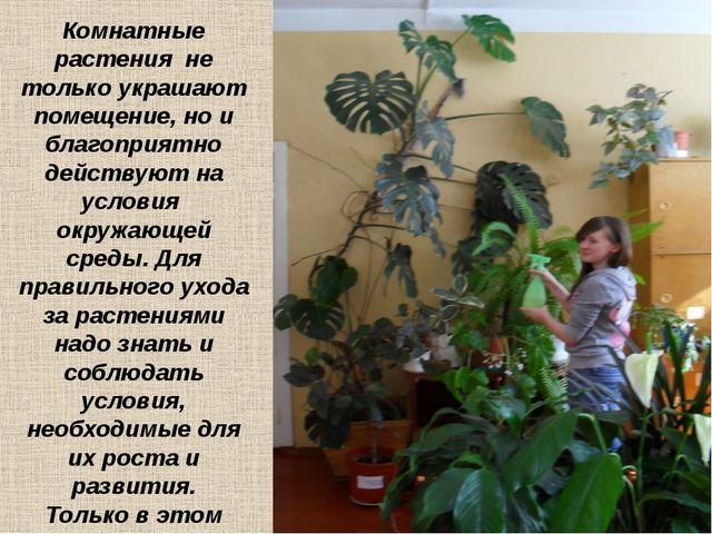 Комнатные растения не только украшают помещение, но и благоприятно действуют...