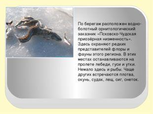 По берегам расположен водно-болотный орнитологический заказник «Псковско-Чуд