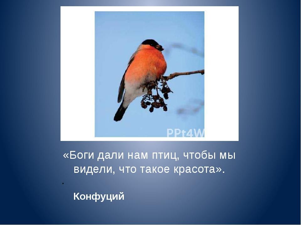 «Боги дали нам птиц, чтобы мы видели, что такое красота». Конфуций Госудлри