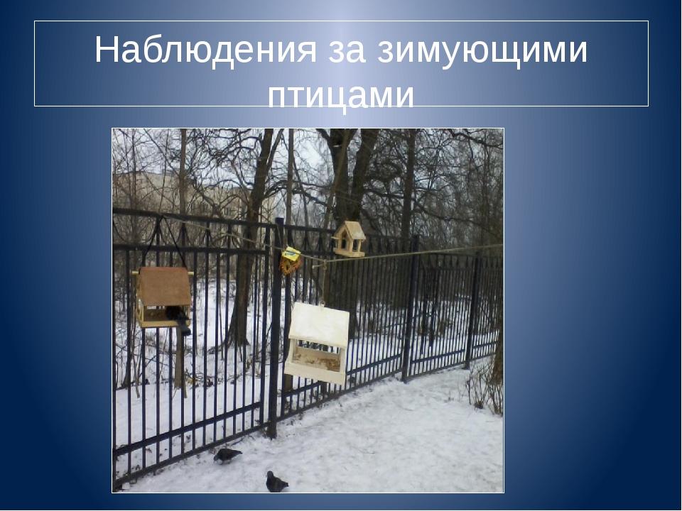 Наблюдения за зимующими птицами