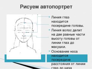 Рисуем автопортрет Линия глаз находится посередине головы. Линия волос делит