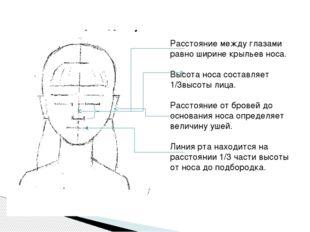 Расстояние между глазами равно ширине крыльев носа. Высота носа составляет 1