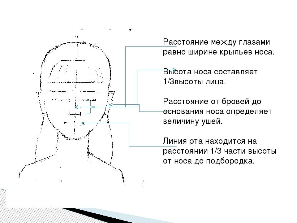 Расстояние между глазами равно ширине крыльев носа. Высота носа составляет 1...