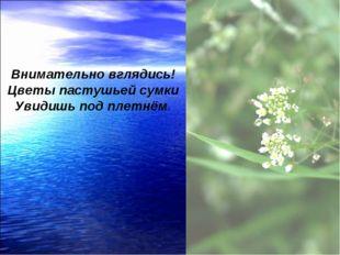 Внимательно вглядись! Цветы пастушьей сумки Увидишь под плетнём.
