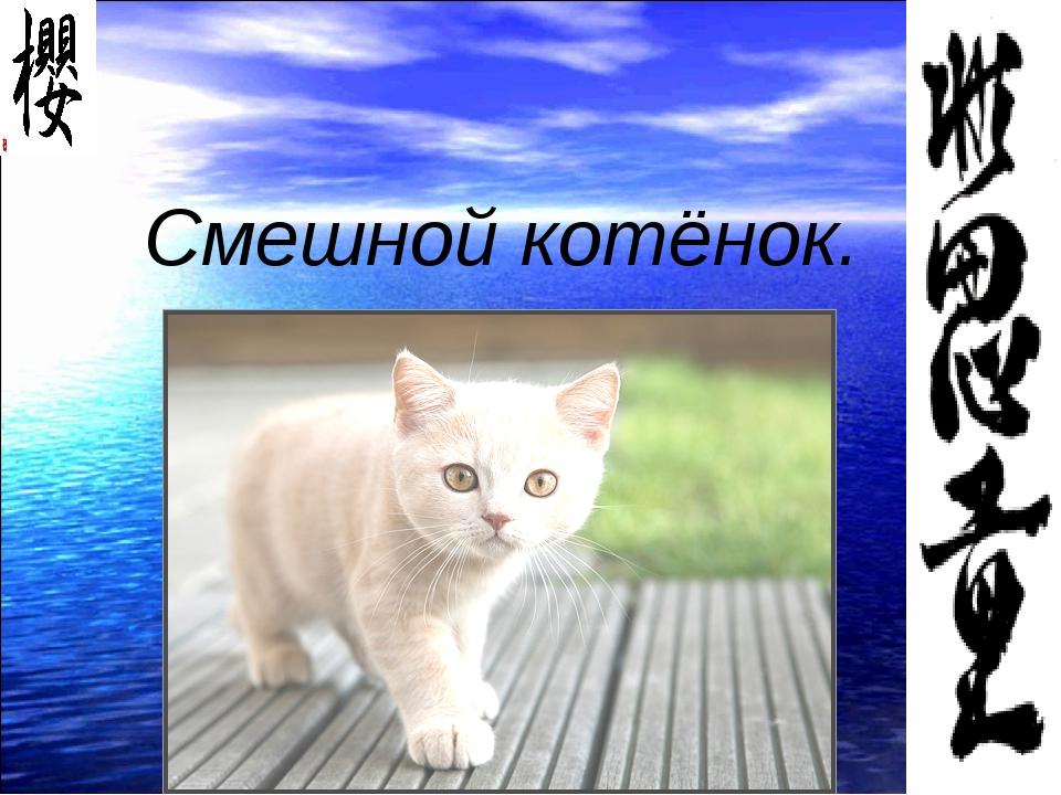 Смешной котёнок.