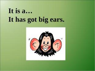 It is a… It has got big ears.
