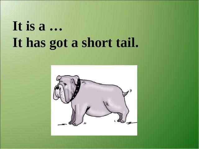 It is a … It has got a short tail.