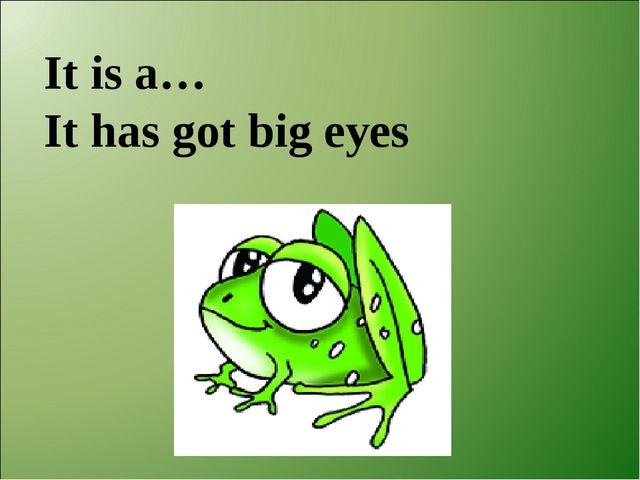 It is a… It has got big eyes