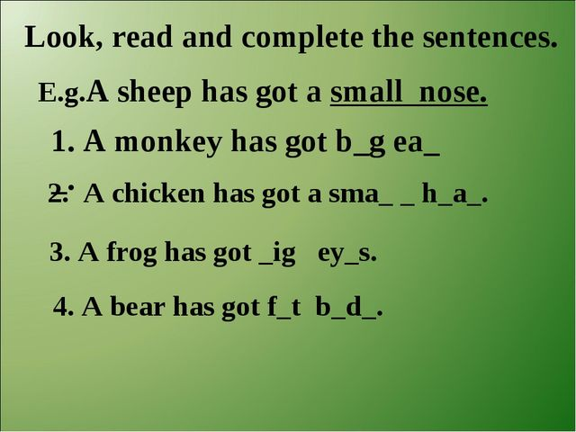 Look, read and complete the sentences. E.g.A sheep has got a small nose. 1. A...