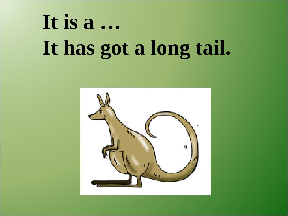 It is a … It has got a long tail.