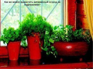 Повысить жизненный тонус поможет свежая зелень со своего подоконника