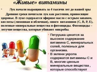 «Живые» витамины Лук начали выращивать за 4 тысячи лет до нашей эры Древние