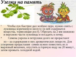 Узелки на память Чтобы лук быстрее дал зелёное перо, нужно снять с луковицы