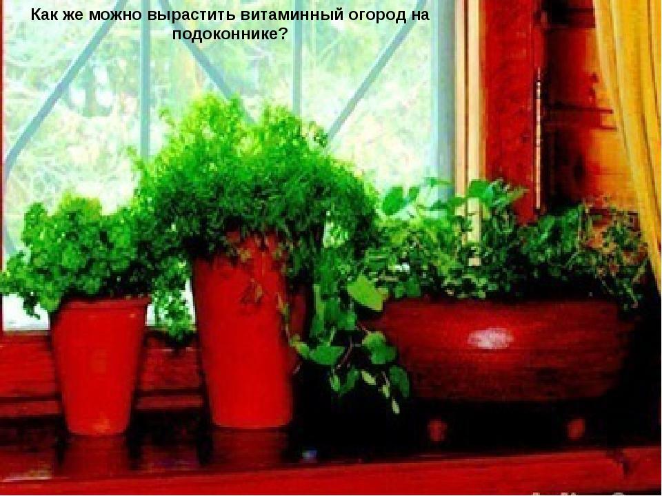 Повысить жизненный тонус поможет свежая зелень со своего подоконника...