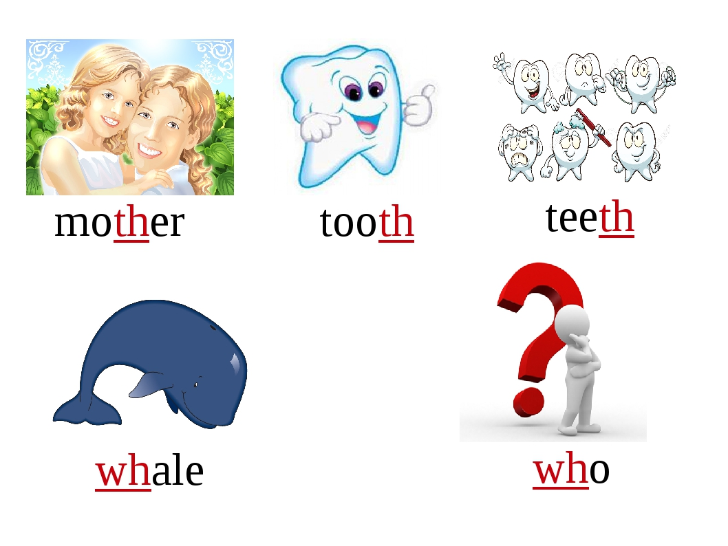 mother tooth teeth whale who