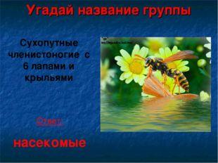 Угадай название группы Сухопутные членистоногие с 6 лапами и крыльями Ответ: