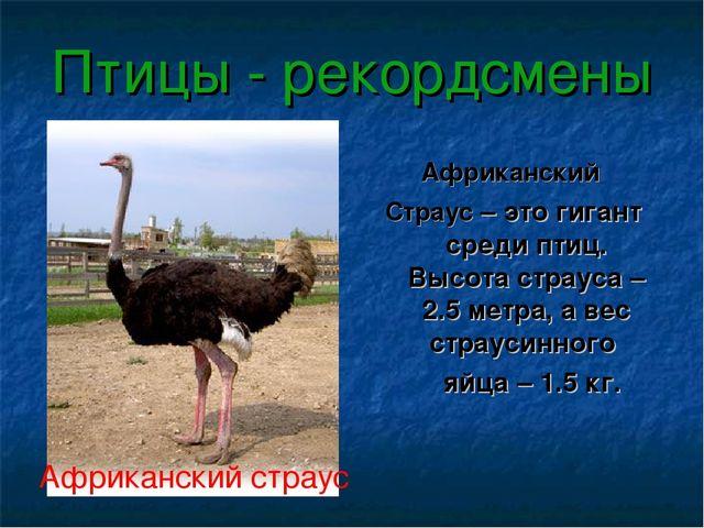 Птицы - рекордсмены Африканский Страус – это гигант среди птиц. Высота страус...