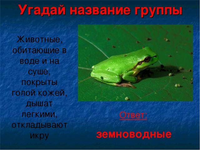 Угадай название группы Животные, обитающие в воде и на суше, покрыты голой к...