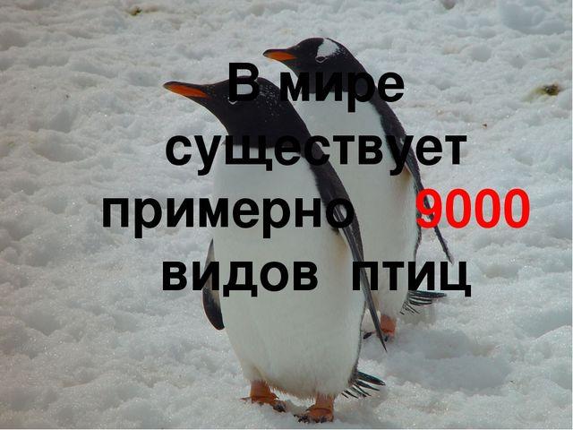 В мире существует примерно 9000 видов птиц