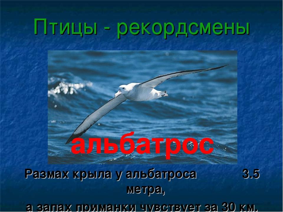 Птицы - рекордсмены Размах крыла у альбатроса 3.5 метра, а запах приманки чув...