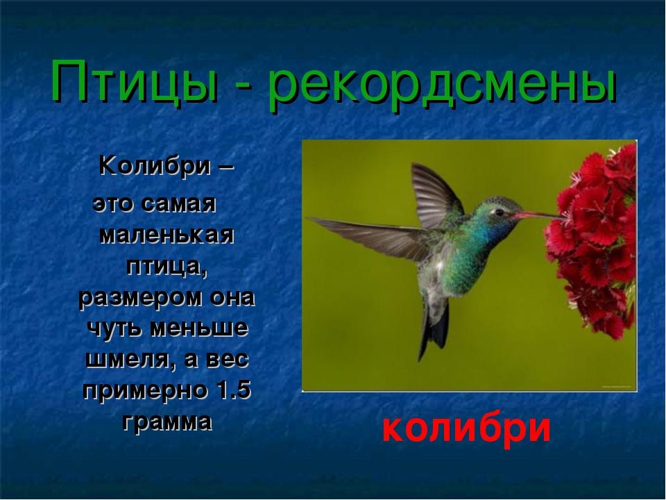 Птицы - рекордсмены Колибри – это самая маленькая птица, размером она чуть ме...